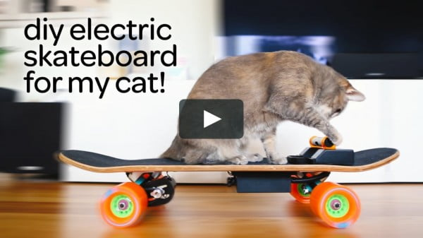 DIY electric skateboard for cats #DIY #crafts #toys