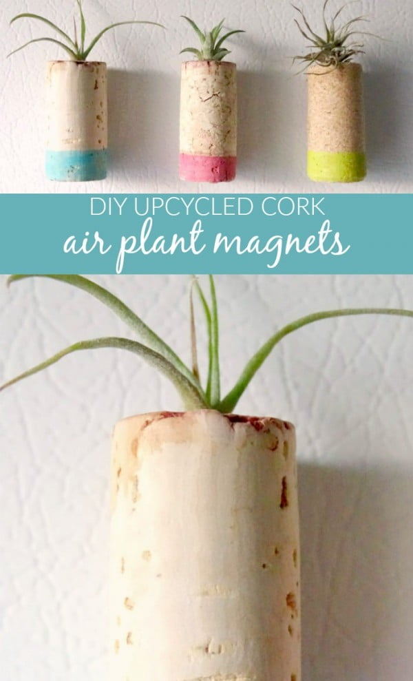 DIY Upcycled Cork Air Plant Magnets #DIY #craft #winecork