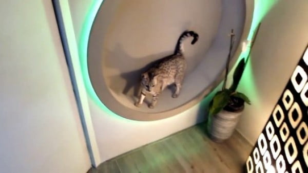 homemade DIY cat wheel (and also designlight) – Видео Dailymotion