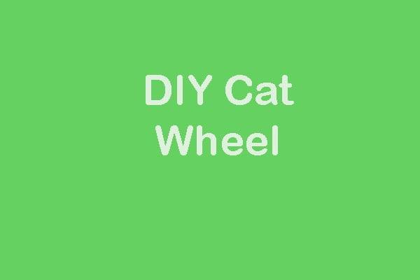 DIY Cat Wheel: Things To Consider