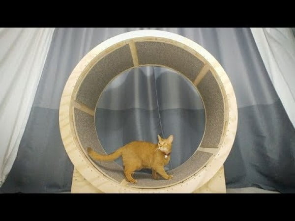 How to make a Cat Exercise Wheel