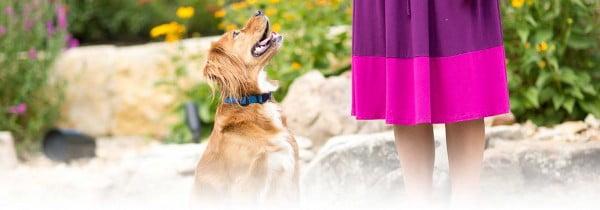 Homemade Dog Treats Recipe for Healthy Dogs