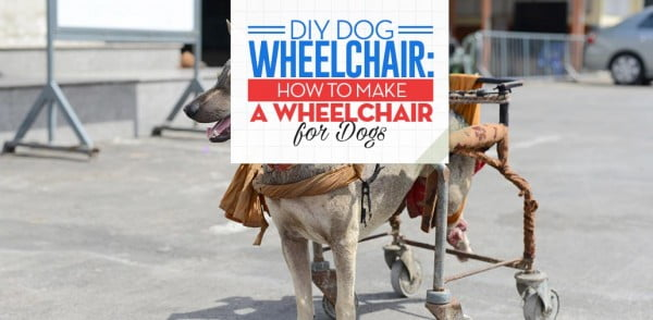 How to Make a Wheelchair for Dogs By Yourself