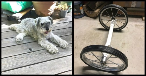 Parents' 10-Year-Old Dog Is Mysteriously Paralyzed, Then Son Spends $30 To Build DIY Wheelchair