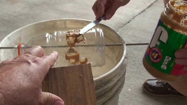 How To Build A Rat Trap How To Make A Rat Trap How To Build A Varmint Trap How To Trap Rats