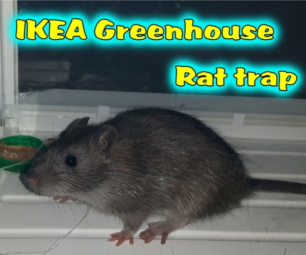IKEA Greenhouse Rat Trap
