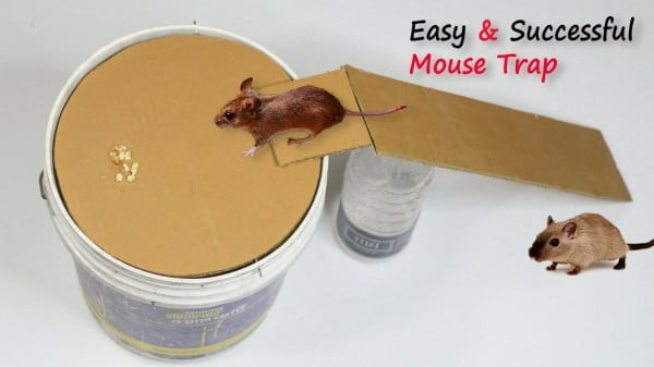 Bucket Mouse Trap