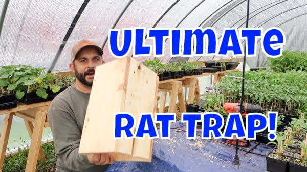 No More Rats! Easy Homemade Rat Trap