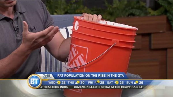 DIY rat trap to control those unwanted pests
