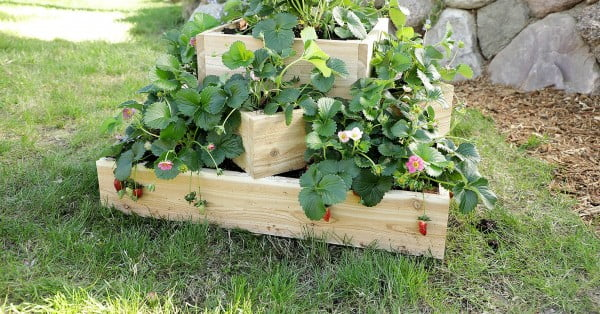 How to Make a Sleek Tiered Strawberry Planter