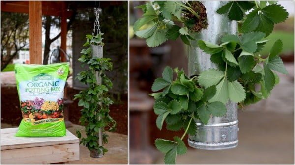 Build Your Own Vertical Strawberry Planter Fast Version